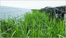雑草対策イメージ